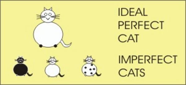 plato-cats